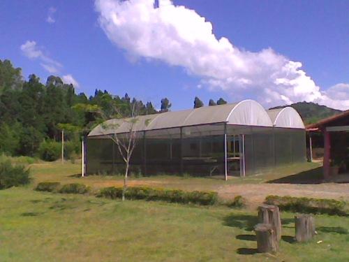 Viveiro, onde já foram produzidas mais de 200 mil espécies nativas