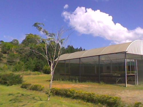 Árvore de pau-brasil plantada no espaço da AMAJF
