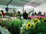 Stand do Parque Halfeld atrai curiosos e colecionadores de plantas