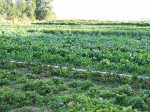 A produção orgânica é feita sem o uso de substâncias químicas